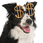 bigstock-Portrait-of-a-dog-with-dollar--21549233sq